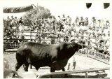 Led Bull